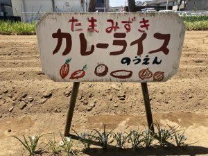 syoku11